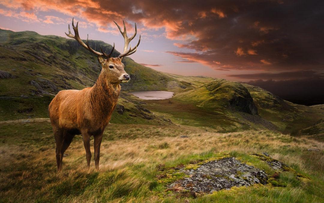 Jagd im Montafon: Im Fadenkreuz von Forst- und Landwirtschaft