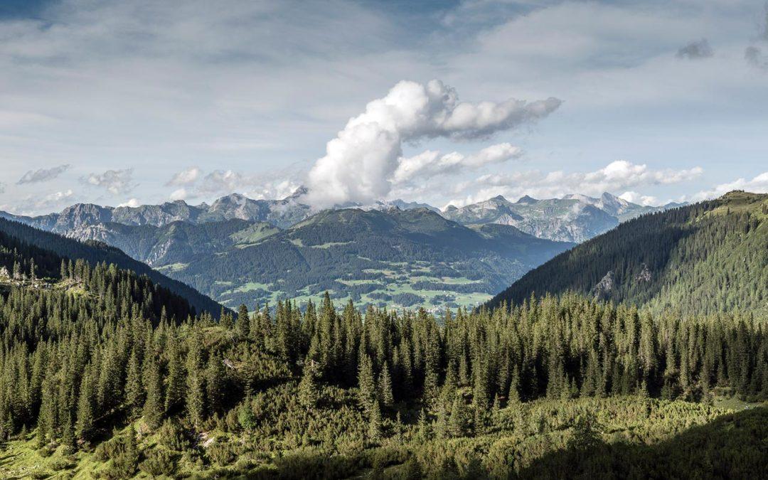 Bergwald und Forstwirtschaft